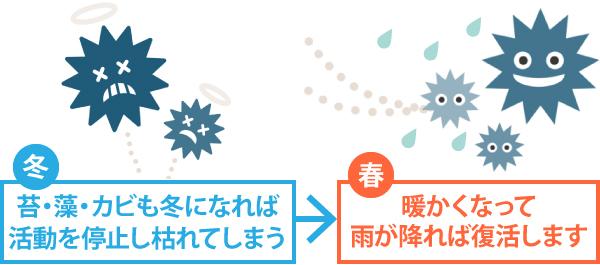 冬に活動を停止し枯れた苔・藻・カビも暖かくなって雨が降れば復活します