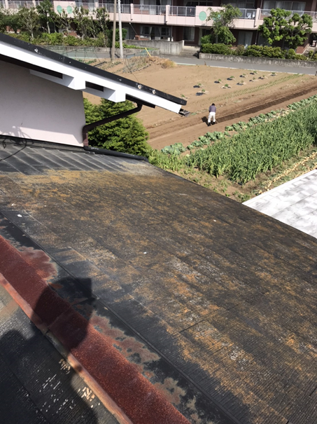 沼津市屋根葺き替えカビ