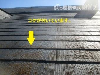 屋根1表面にコケ