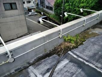 函南町 屋上排水雑草生え