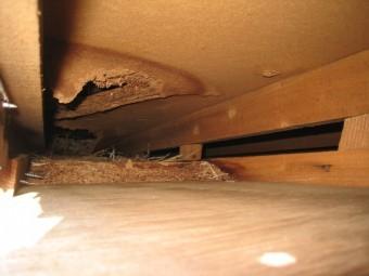 屋根裏が雨水で腐食