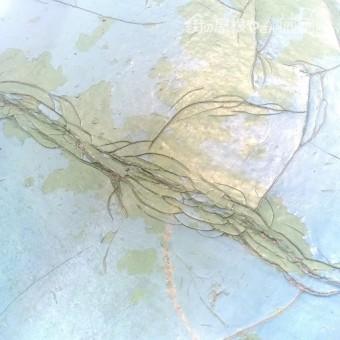沼津市ベランダ塗膜亀甲状態