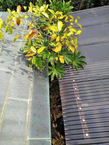 長泉雨樋植物台風