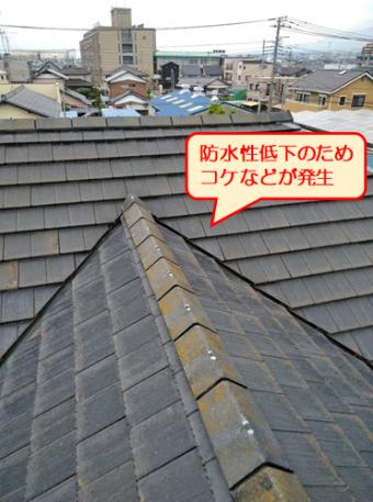 清水町セメント瓦コケ